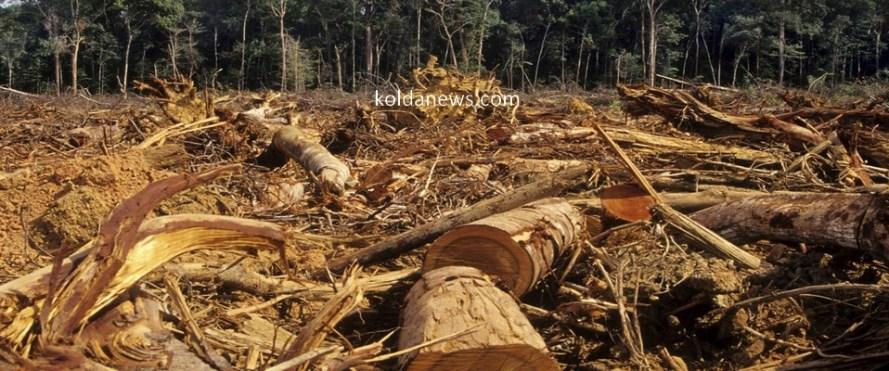 deforestation_casamance_gambie_traffic_bois