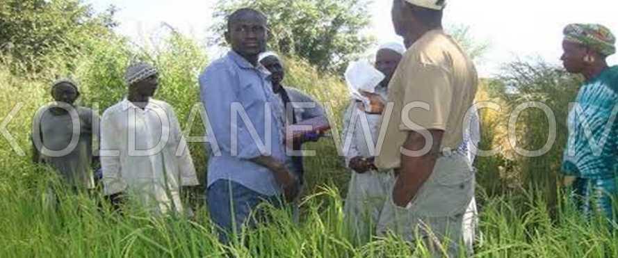 roducteurs du secteur 5 affectés  au secteur 2 de la vallée de l'Anambé