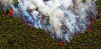 kebakaran hutan di riau