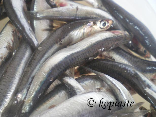 Fresh Gavros (Anchovies)
