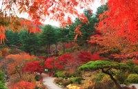 Enjoy the seasons with flower festivals : Korea.net : The ...