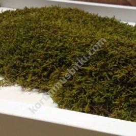 doğal korunmuş 3 boyutlu kara yosunu