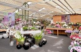 Blumen, Demo, Pflanzen