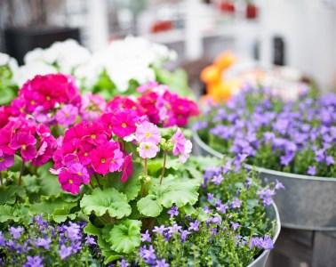 """""""Der blühende Garten"""" - Florales Flair für Garten- und Dekofreunde"""