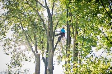 Baumpfleger Carsten Breker, Garten- und Landschaftsbau