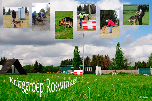 Kringgroep Roswinkel Duitse Herder training