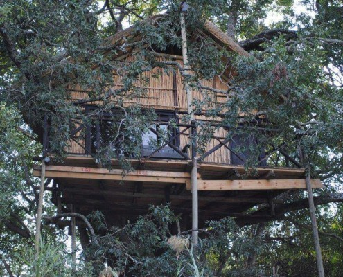 Tree House Accommodation Safari Greater Kruger National Park