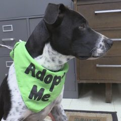 Buckshot is Ready for Adoption
