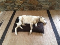 Dog Beds - medium - KT-Lee Ranch Alpacas