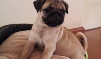 Kuddly Employee's First Pet: Beba