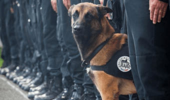 Cool News: New Body Armor For Dogs