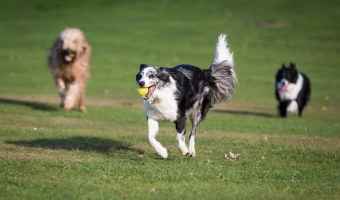First Time at the Dog Park: What You Need to Know