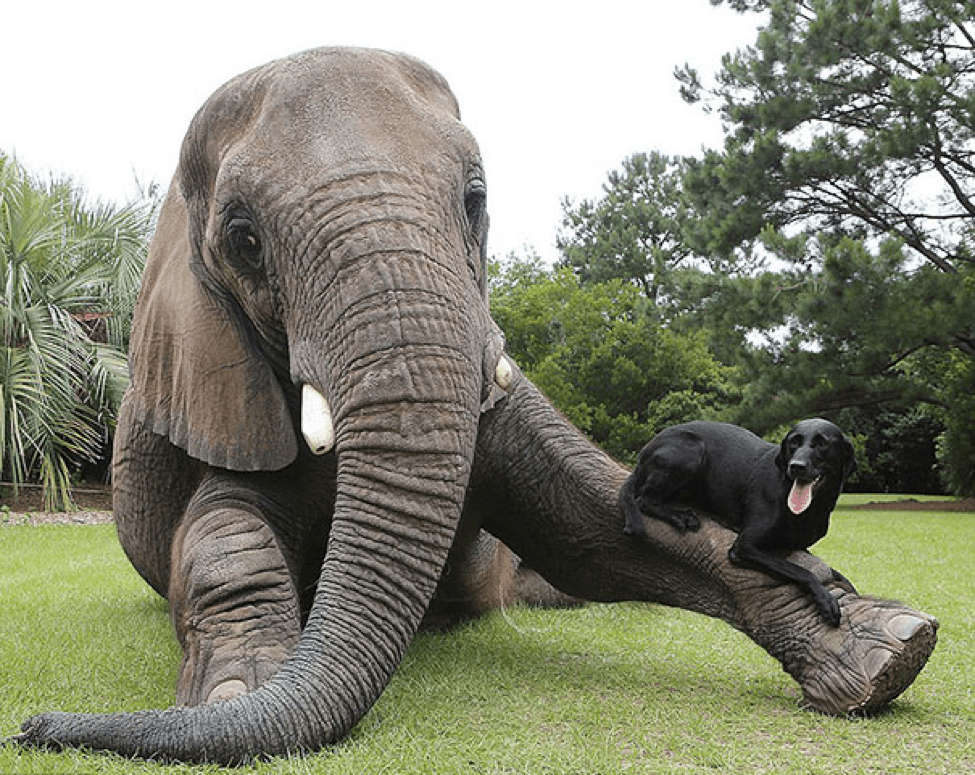 elephant and dog