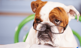 Find Out Your Dog's IQ: Does this Test Work?