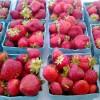 strawberries q