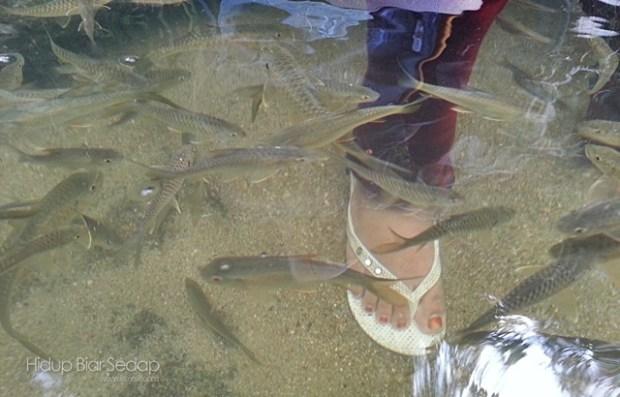 ikan kelah santuari sungai chiling
