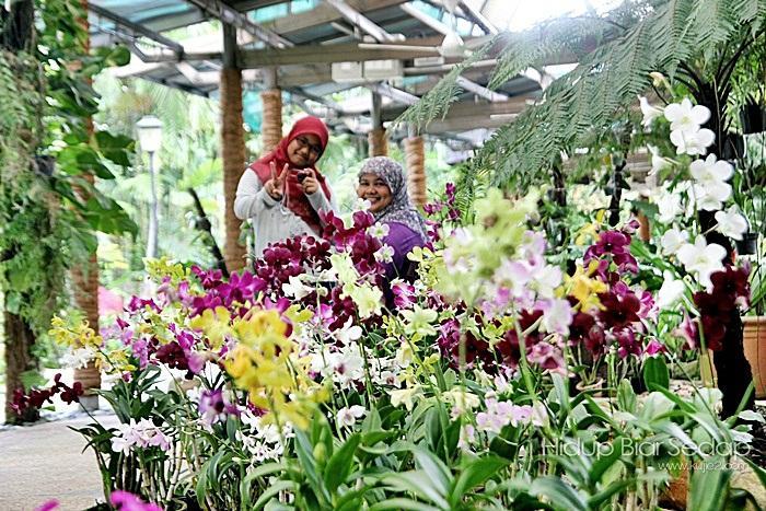 melawat taman orkid