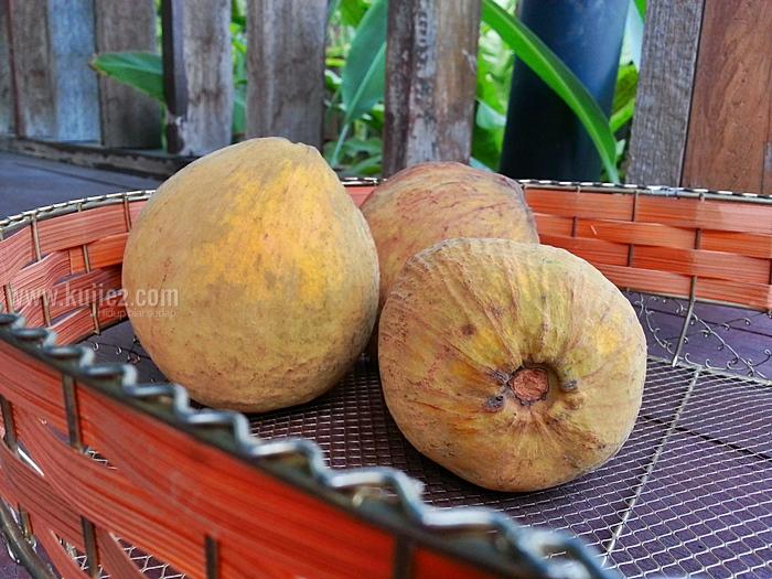 buah-sentul