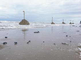 strandfestijn-kurt-claeys-2016_2