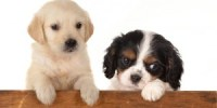 cute-puppies-300x229