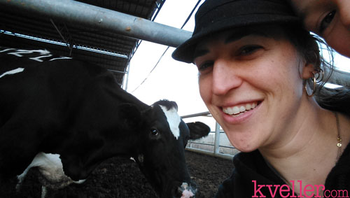 mayim-cow