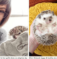 Ramona the Hedgehog before and after adoption