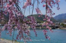 "The famous ""Moon Crossing Bridge"" (渡月橋) seen from the Nakanoshima-tei (中之島亭) park area in Arashiyama during the sakura season."