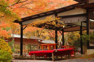 Autumn_Leaves_in_Kyoto
