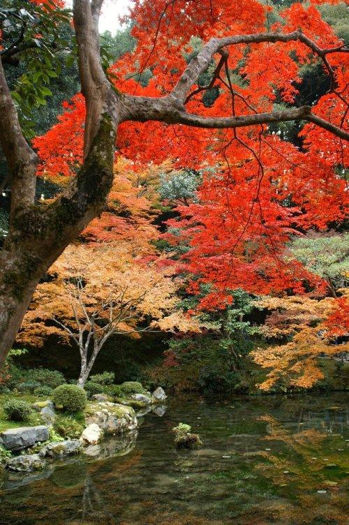 Nanzenji_Temple_Autumn_Foliage_Kyoto