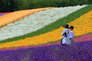 farm_tomita_lavender_garden_furano_japan