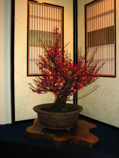 Red_Plum_Blossom_Bonsai
