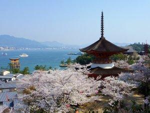 Itsukushima_Shrine_in_Spring