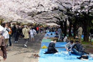 placing_shoes_ueno_park_hanami