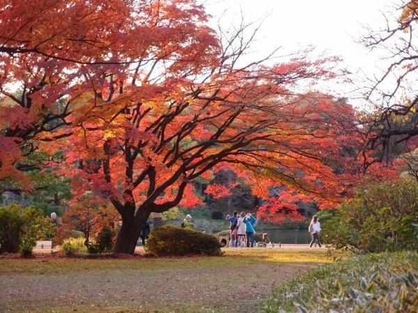 rikugien_garden_autumn_leaves_tokyo