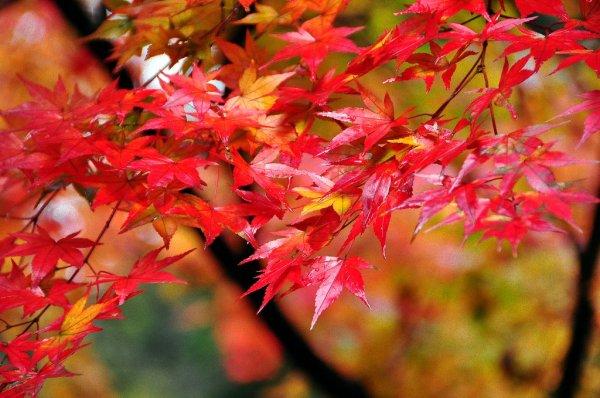 yamadera_autumn_leaves_tohoku