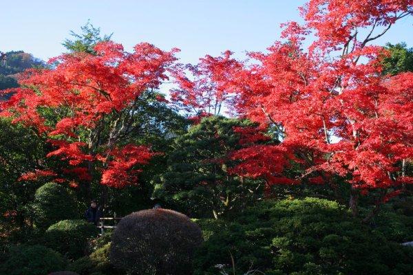 shoyoen_garden_autumn_nikko
