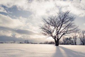 koiwai_farm_in_winter