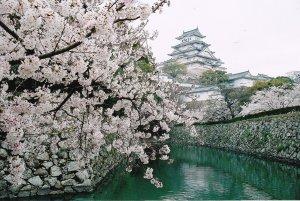 himeji_castle_cherry_blossom_japan