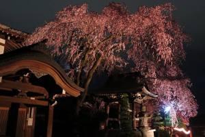 night_illuminations_takato_castle_ruins_park_nagano_japan