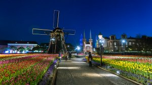 night_tulips_huis_ten_bosch_in_nagasaki