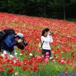 farm_tomita_flower_field