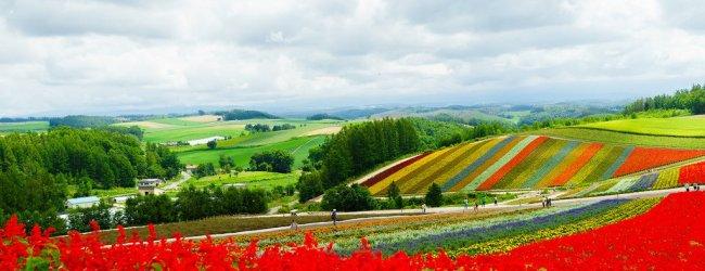 Shikisai no Oka in Biei | Hokkaido Flower Season