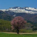 furano_spring_nature_hokkaido