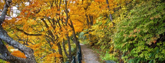10 Best Places to see Autumn Leaves in Tohoku