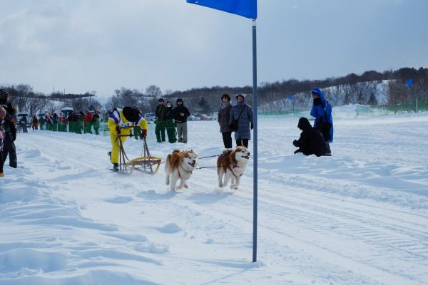 the_japan_cup_national_dogsled_championship