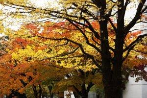 hokkaido_autumn_foliage