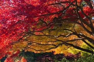 autumn_foliage_in_tokyo_japan