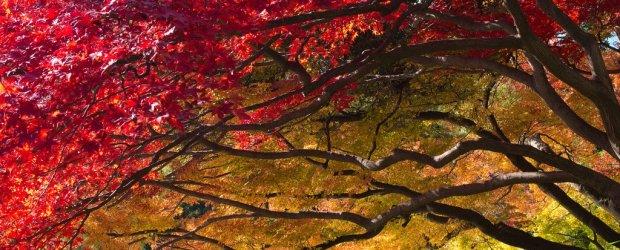Autumn Leaves in Tokyo | Japan Koyo 2016