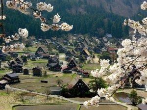 shirakawago_cherry_blossoms