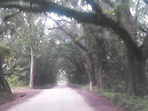 300x225 Canopy, in Boring Pond Road, by John S. Quarterman, 13 April 2015